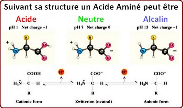 acide aminé acidité
