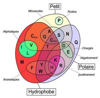 catégories acides aminés
