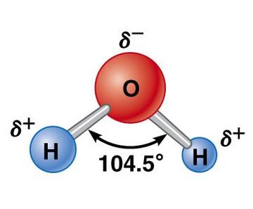 bioelectronique eau molécule polaire