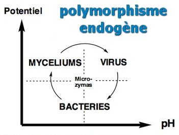 polymorphisme microzymas graphe