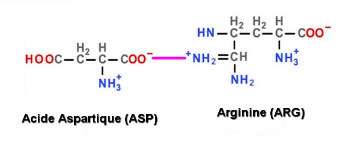 liaison ionique ASP ARG