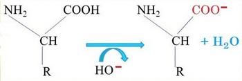 alcalin perd proton