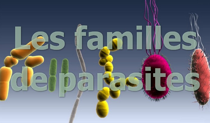 frequencetherapie famille parasites